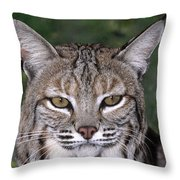 Bobcat Portrait Wildlife Rescue Throw Pillow