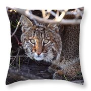 Bobcat Squared Throw Pillow
