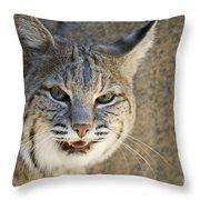 Bobcat Throw Pillow
