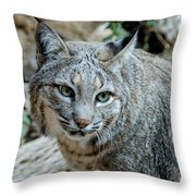 Bobcat's Gaze Throw Pillow