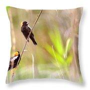 Bobolink - 6 Throw Pillow