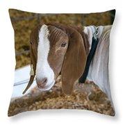 Boer Goat Throw Pillow