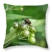 Bogues Sur Une Plante Throw Pillow