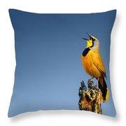 Bokmakierie Bird Calling Throw Pillow