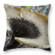 Dryad's Saddle Polyporus Squamosus Throw Pillow