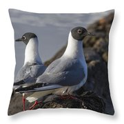 Bonaparts Gull's Throw Pillow