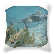 Bonefish Pursued By A Shark, 1972 Throw Pillow