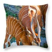 Bongo Mother And Calf Throw Pillow