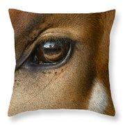 Bongo Skin Pattern Throw Pillow