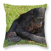 Bonobo Throw Pillow