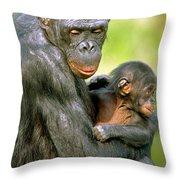 Bonobo Pan Paniscus Mother And Infant Throw Pillow