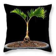 Bonsai Palm Tree Throw Pillow
