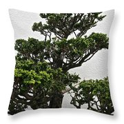 Bonsai Pine Throw Pillow