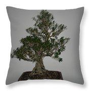 bonsai tree Serissa Foetida live tree art exposed root over rock Throw Pillow