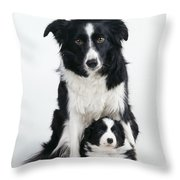 Border Collie Dog & Puppy Throw Pillow