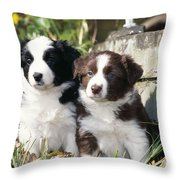 Border Collie Dog, Two Puppies Throw Pillow