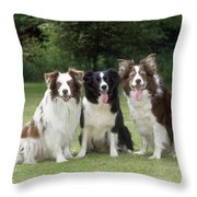 Border Collie Dogs Throw Pillow