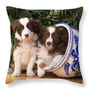 Border Collie Puppies In Plant Pot Throw Pillow