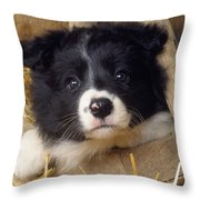 Border Collie Puppy And Wooden Wheel Throw Pillow
