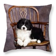 Border Collie Puppy On Chair Throw Pillow