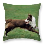 Border Collie Running Throw Pillow