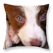 Border Collie Tan And White Pup Throw Pillow