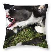 Border Collies Playing Throw Pillow