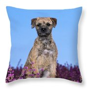 Border Terrier Dog, In Heather Throw Pillow