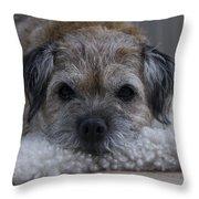 Border Terrier Netherlands Throw Pillow