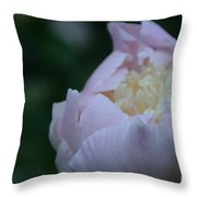 Bordering On Pink Throw Pillow
