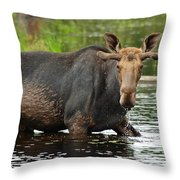 Boreal King Throw Pillow