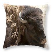 Bored Buffalo Throw Pillow