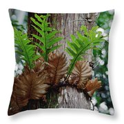 Borneo Fern A Primitve Ant Plant Throw Pillow