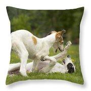 Borzoi Puppies Playing Throw Pillow