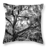 Bosque Bello Oak Throw Pillow