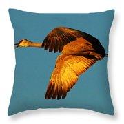 Bosque Del Apache Sandhill Crane Golden Light Throw Pillow