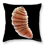 Bot Fly Larva Throw Pillow