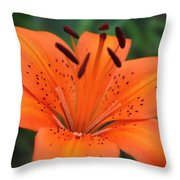 Botanical Beauty 1 Throw Pillow