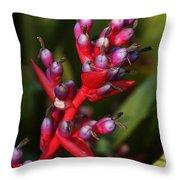 botanical garden in Costa Rica 2 Throw Pillow