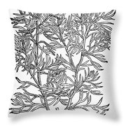 Botany: African Rue, 1597 Throw Pillow