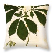Botany: Ginseng Throw Pillow