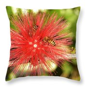 Powder Puff Flower With Bees Throw Pillow