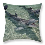 Bottlenose Dolphin In Shallow Lagoon Throw Pillow