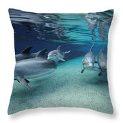 Bottlenose Dolphins In Shallow Water Throw Pillow