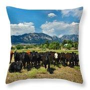 Boulder Beef Throw Pillow
