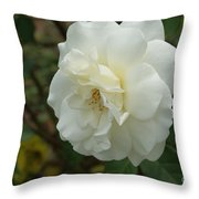 Bountiful White Rose... Throw Pillow