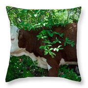 Bovine In The Shade Throw Pillow