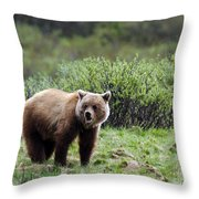 Bow Lake Bear Throw Pillow