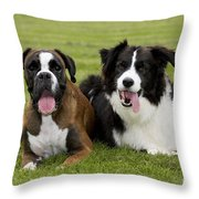 Boxer And Border Collie Throw Pillow