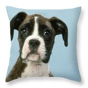 Boxer Dog, Close-up Of Head Throw Pillow by John Daniels